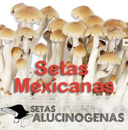 Comprar setas Mexicanas