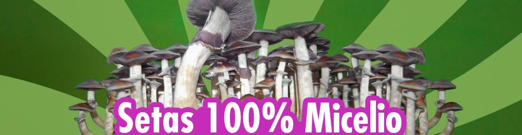 Setas micelio, setas magicas online