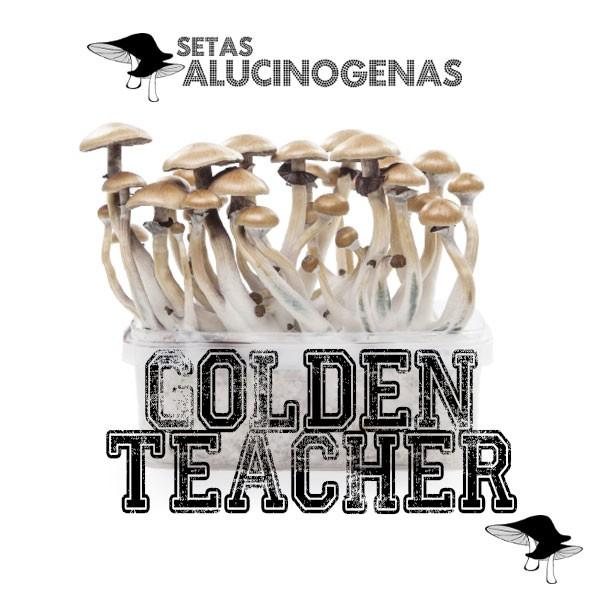 venta oline kit setas golden teacher