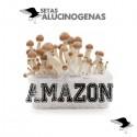 Comprar Kit Setas Amazonian 100% Micelio