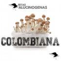 Comprar Kit Setas Colombianas 100% Micelio