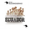 Comprar Kit Setas Ecuatoriana 100% Micelio