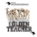 Comprar Kit Setas Golden Teacher 100% Micelio