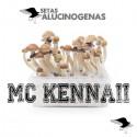 Comprar Kit Setas McKennaii 100% Micelio