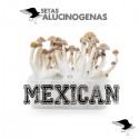 Comprar Kit Setas Mexicana 100% Micelio