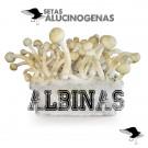 venta oline kit setas albinas