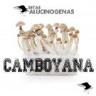 venta oline kit setas camboya