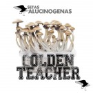 venta oline kit setas golden teacher