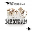 venta oline kit setas mexican