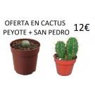 oferta en cactus peyote y san pedro